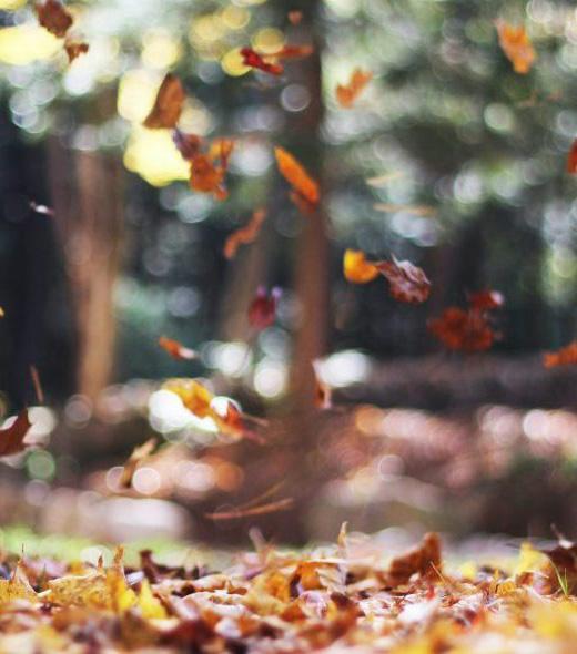 autumn-mott-rodeheaver